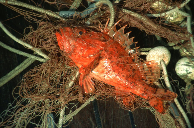 Croatia travel agency photo gallery croatia travel agency for Types of red fish